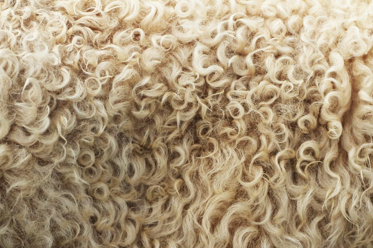 μαλλί προβάτου